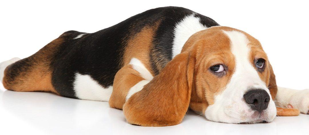 Three Ways to Remove Dog Diarrhea From Carpet